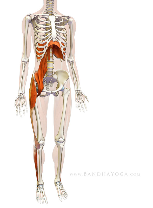 <strong>Diaphragm-Psoas Connection</strong> - This image is from <em>Sankalpa, Visualization and Yoga: The Diaphragm-Psoas Connection</em> on the <em>Daily Bandha</em> blog series.