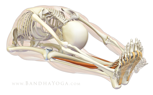 Extending the toes in Paschimottanasana deepens and strengthens the arches